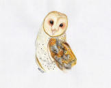barnowl_watercolor