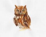 burrow_owl