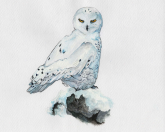 snowowl_watercolor